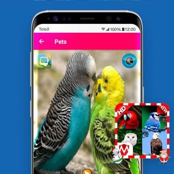 vogelgeluiden app 100 vogelgeluiden Tele2