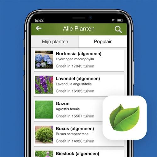 MijnTuin-planten-herkennen-Tele2