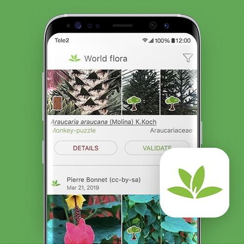PlantNet-planten-herkennen-Tele2