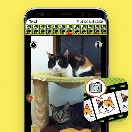 Kittycam-apps-voor-katten-Tele2